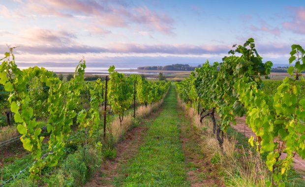Nova Scotia Wine Vineyard water