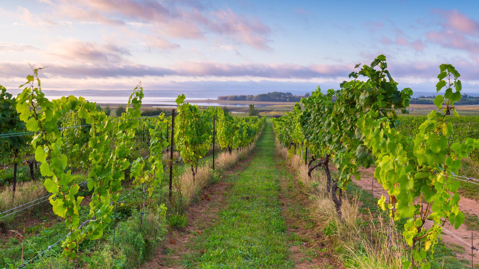 Wine Growers Nova Scotia
