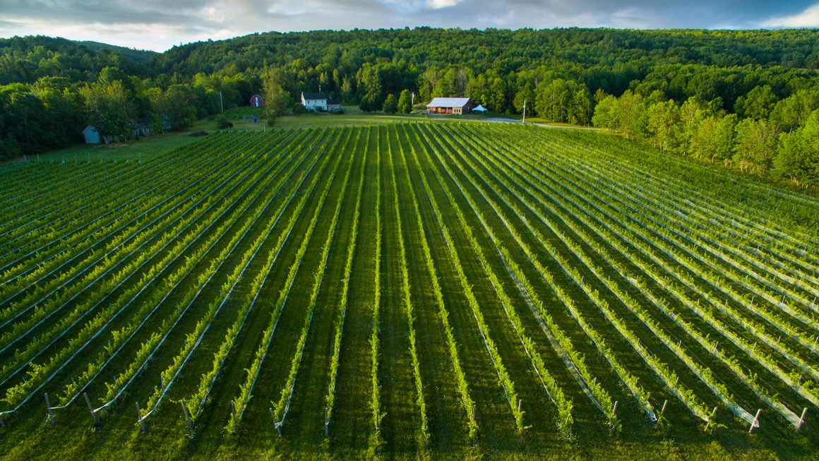 L'Acadie Vineyard, c Jamie Robertson