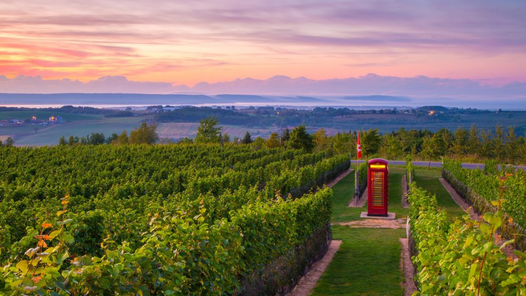 Luckett Vineyards English Phone Booth in field