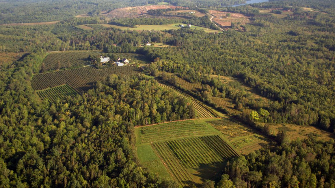 Lunenburg County Winery Vineyard