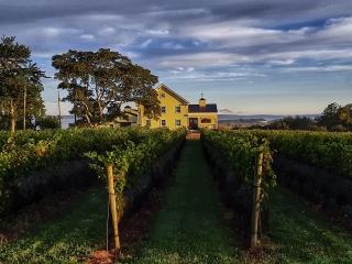 Mercator Vineyards