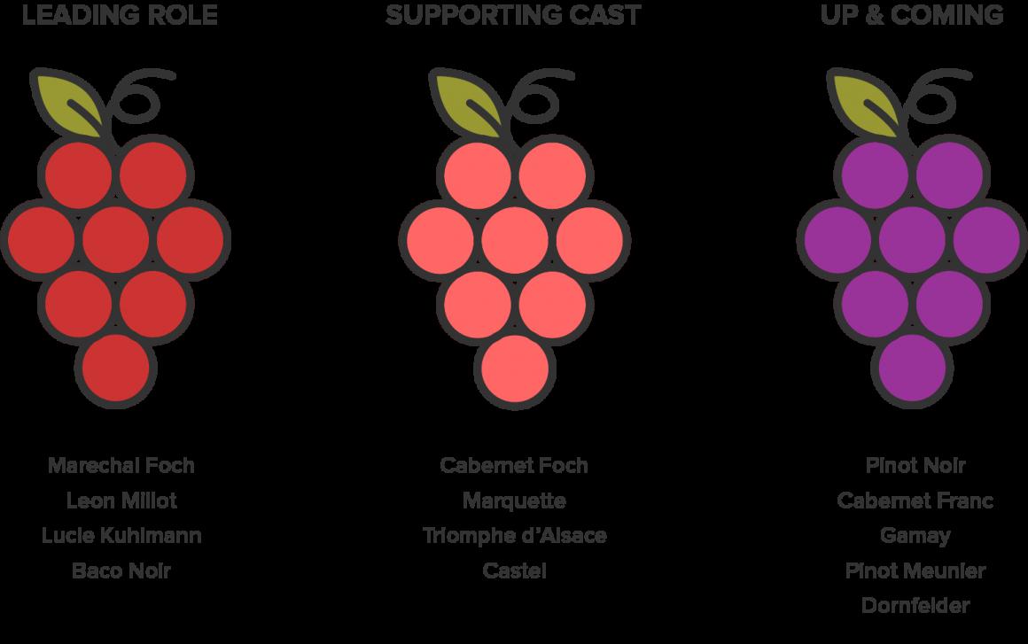 Red Wine Grapes of Nova Scotia