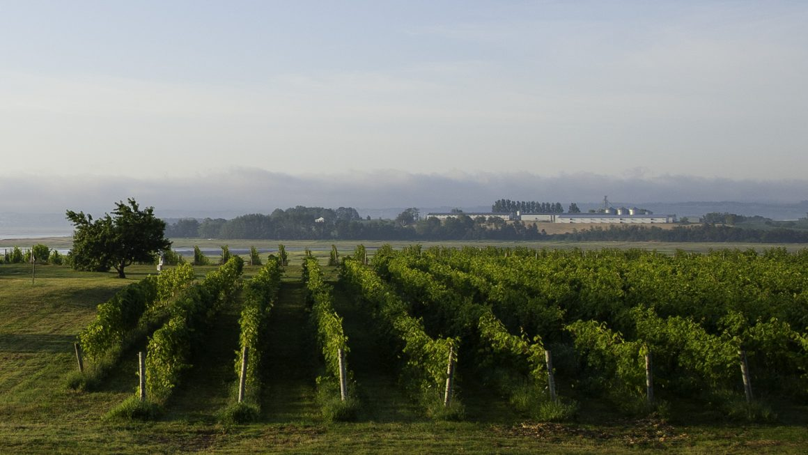 Blomindon Estate Winery
